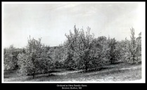 Orchard at Hess Family Farm