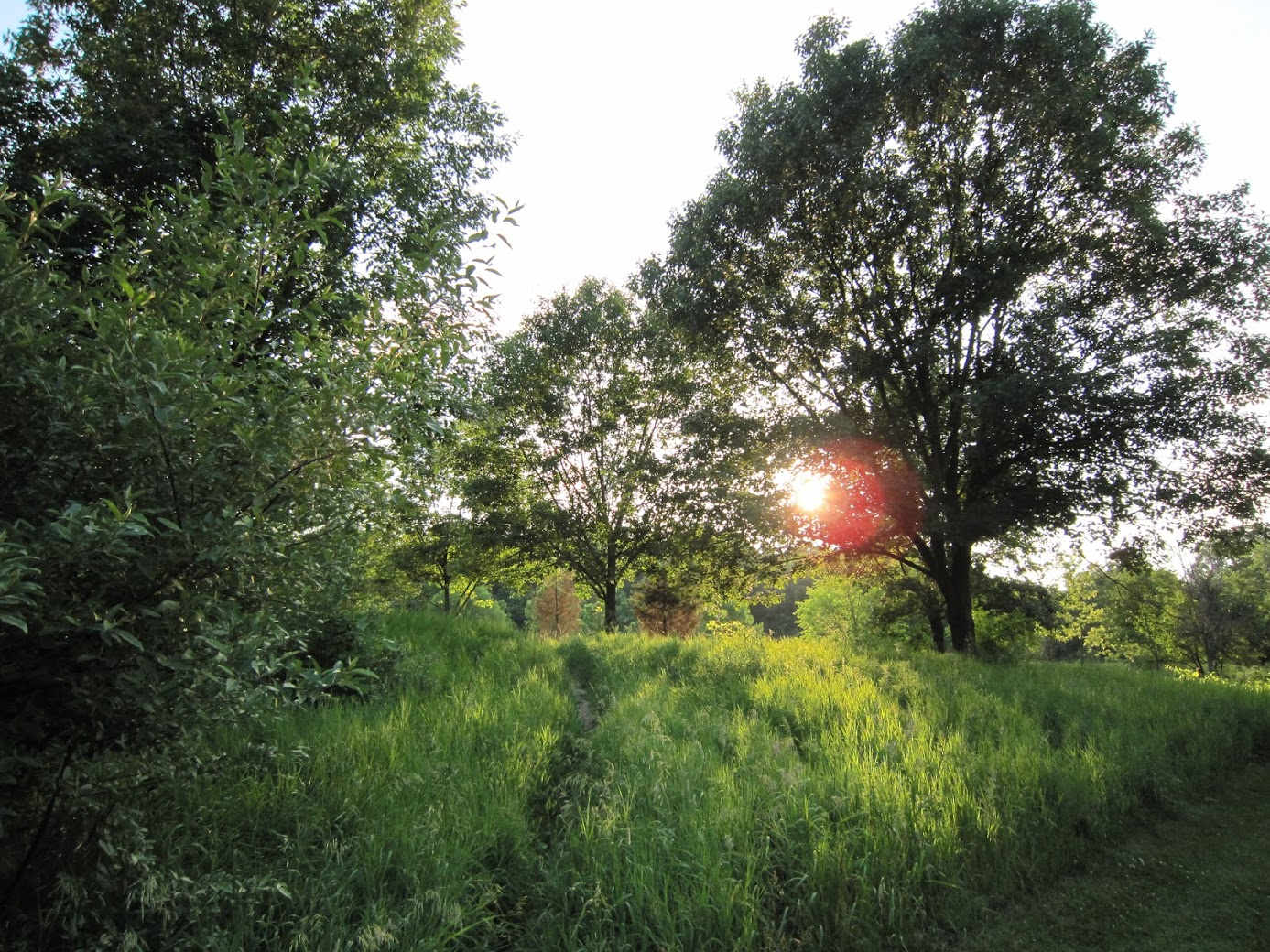 LCG photo of a meadow